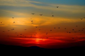 sunset time lapse photography tips 4