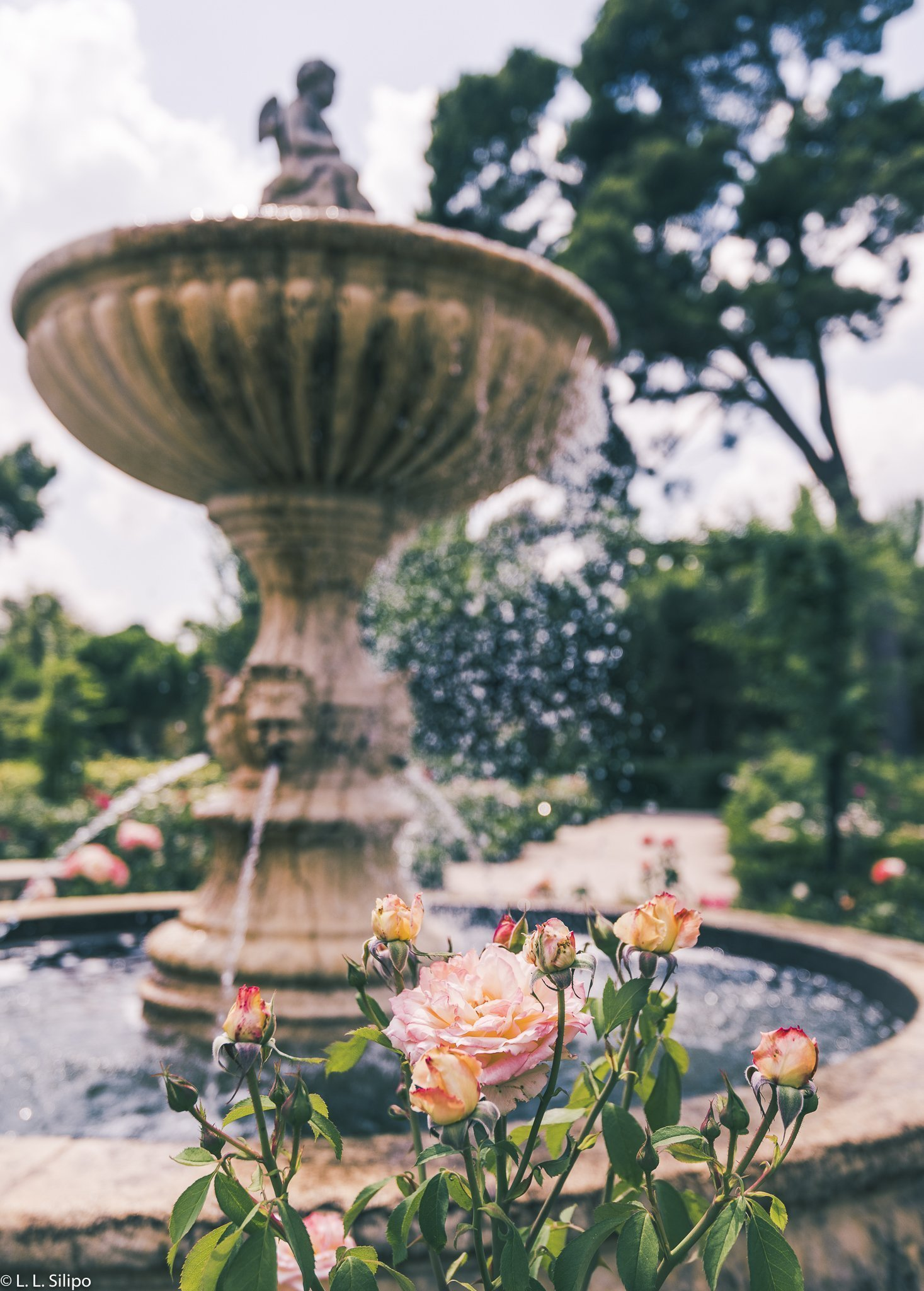 Madrid, Spain, beautiful, beauty, botanical, color, colorful, flora, floral, flower, garden, green, landscape, nature, no person, outdoors, park, rose, roses, spanish, summer, travel, water