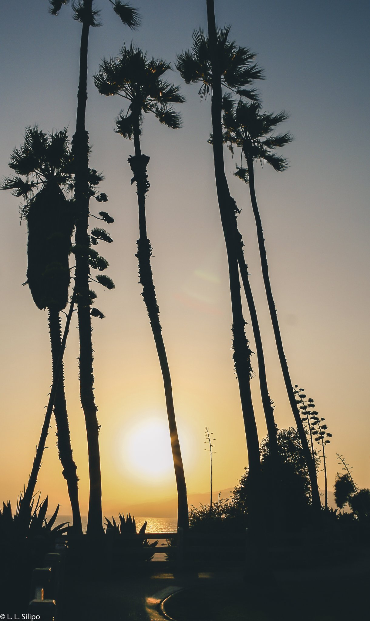 Angeles, California, Los, Monica, Santa, america, backlit, beach, coast, dawn, evening, landmark, landscape, los angeles, ocean, outdoors, pacific, palm, santa monica, santa monica beach, silhouette, sky, sunset, tree, usa
