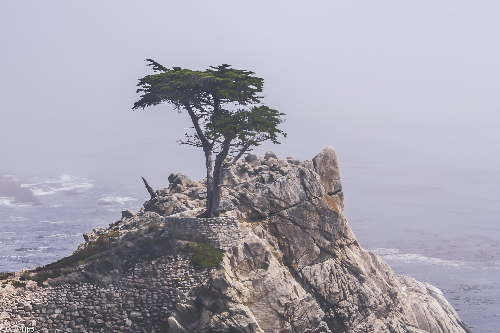 California, Cypress, Lone, Monterey, american, coastal, landscape, monterey county, nature, ocean, scenic, seashore, travel, tree, usa